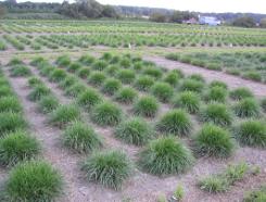 Gräsersorten 15 futterpflanzen gräser